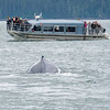 whale watching near skagway alaska