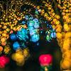 christmas light bokeh at daniel stowe gardens belmont north carolina