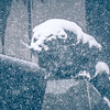 black panther statue seen through falling snow flakes