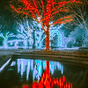Lights, Christmas, Light, Christmas tree, Green, Color, Red, Blue, Colorful, Shiny, Celebration, Festive, Holiday, Xmas, New, Seasonal, Outdoors, Outdoor, Tree, Photo, Trees, Winter, Year, City, Illumination, Merry, Night, Glow, Decorations, Eve, Magic,