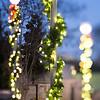 christmas lights holiday decorations around charlotte north carolina