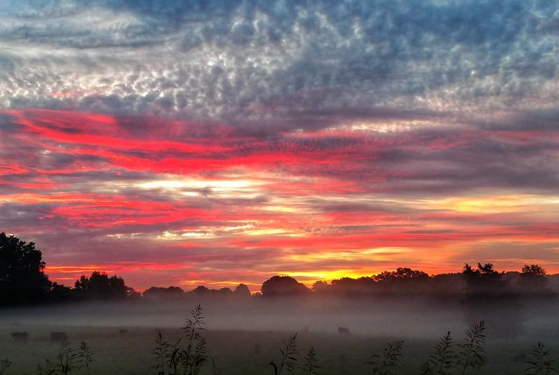 fog carpet over cattle farm
