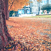 autumn park sidewalk covered in leaves