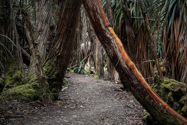 Follow the Path...