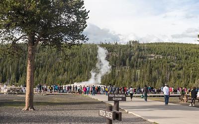 03-Yellowstone June 14-7385