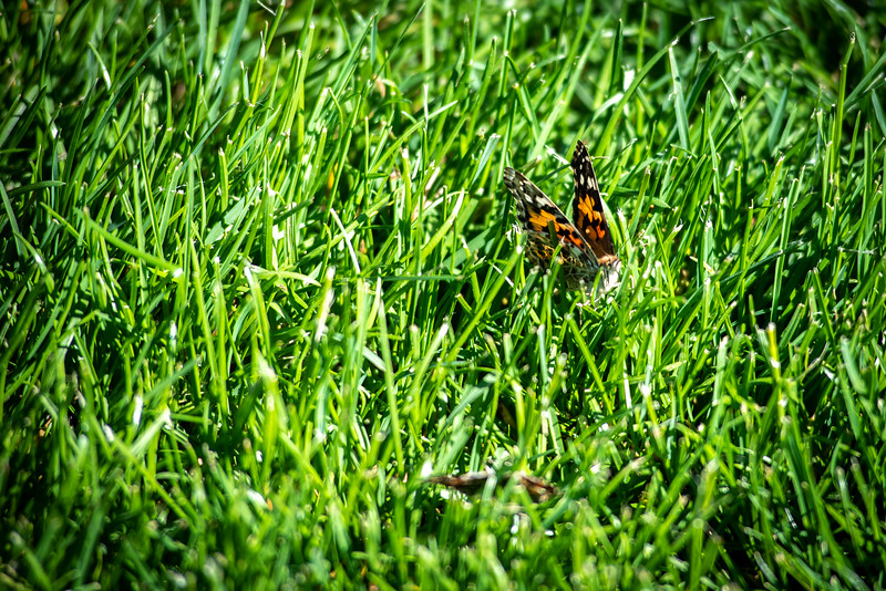 A butterfly lands on Max Marr field on Saturday, May 26, after it was released by students in a ceremony to honor classmate Gabriel Archuleta who died in September. Archuleta would have graduated with the 2018 class.