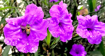 6_8_18 Morning Shower Pollination