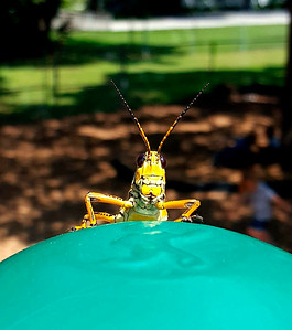 7_23_18 Grasshopper Greeting