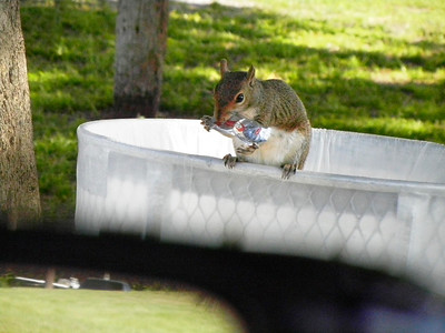 11_9_18 Hungry Squirrel at the Park