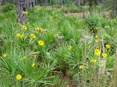10_19_18 Palmetto and Wildflowers
