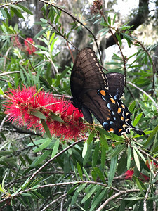 10_21_18 Beautiful Butterfly in my back yard