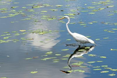 9_7_18 Bird on the water