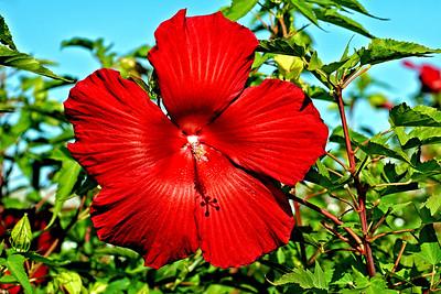 Attractive Bloom