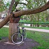 Giant hand holding up both tree and bike at Vondelpark, Amsterdam