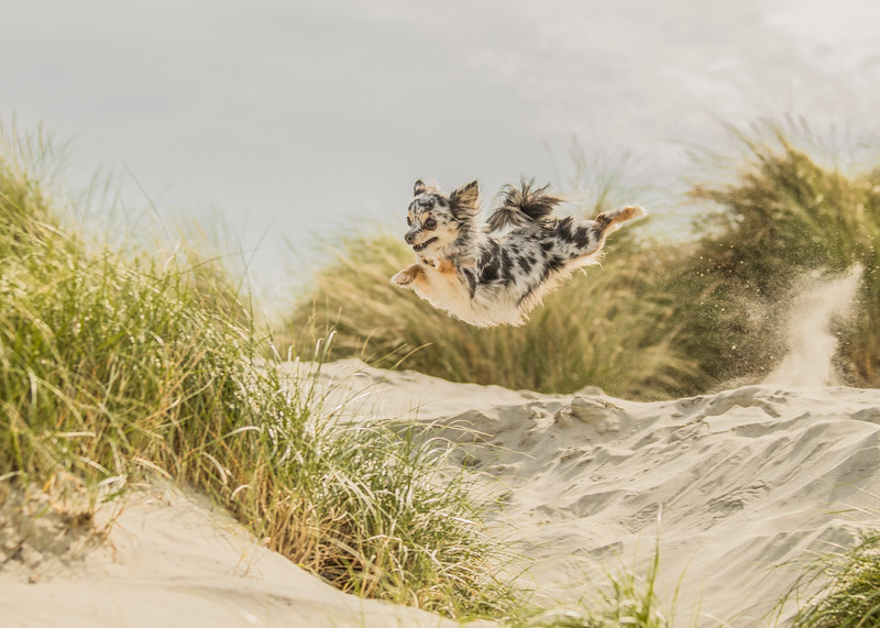 Dogs at Play Category 2nd Place Winner  Steffi Cousins, United Kingdom