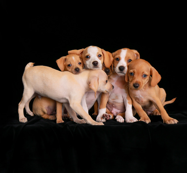 Puppies Category 2nd Place Winner Charlie Nunn, United States of America