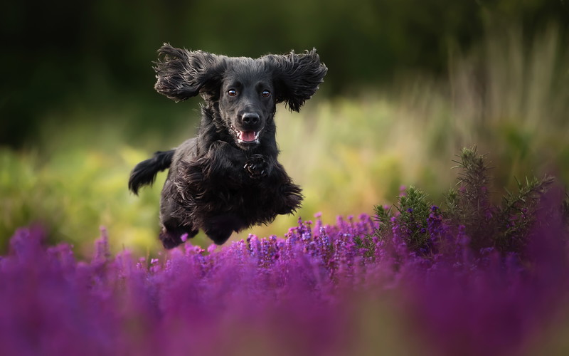 Judges' Special Mention Dogs at Play category Alice Loder, United Kingdom