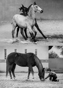 HorsesComposite2