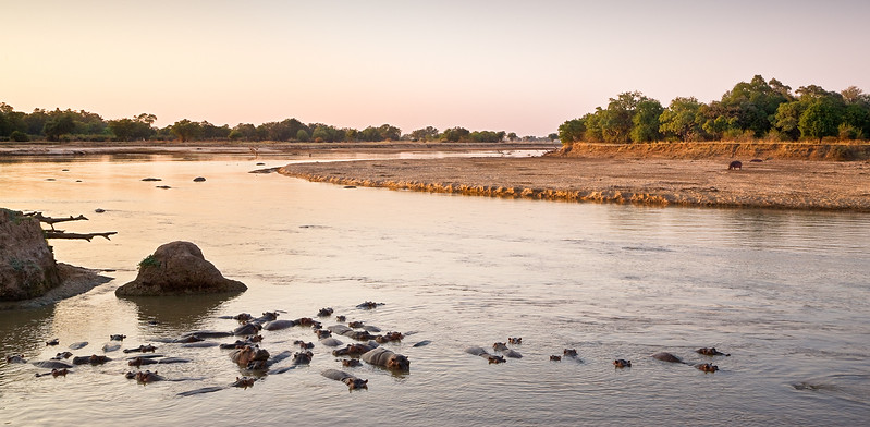 Hippo River Morning I