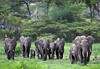 Elephant charging-Master24x35_Final_p21x14v2