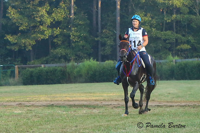 US Riders and Horses 2018 Endurance WEG