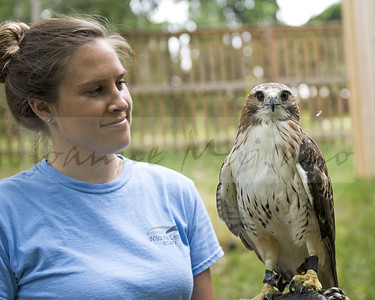Jessica Andersen in charge of rescue and rehab with Red tail hawk who