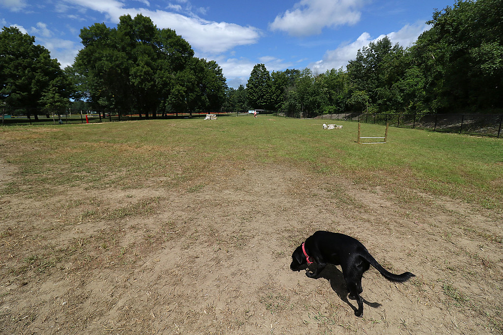 . The Fitchburg Dog Park at Coolidge Park is now opened and it being used by many to help their dogs get some much need exercise. SENTINEL & ENTERPRISE/JOHN LOVE