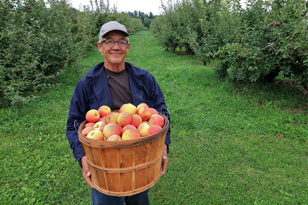 . Fruit Grower at Flat Hill Orchards in Lunenberg John Locker holds a basket of their Honey Crisp that they have growing on the farm. SENTINEL & ENTERPRISE/JOHN LOVE
