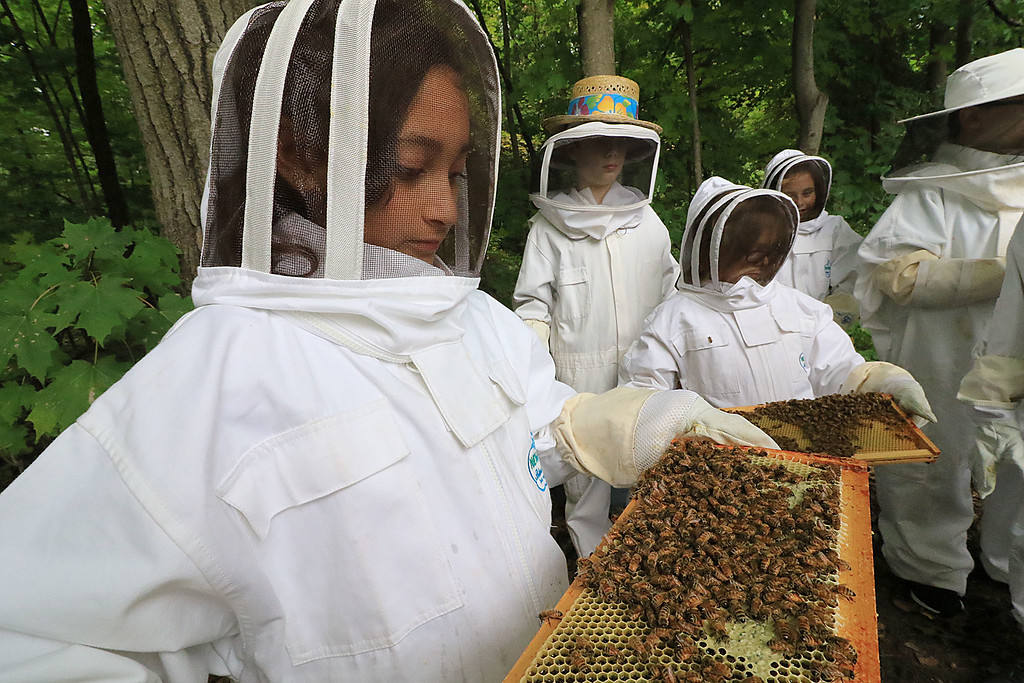 . The Boys and Girls Club of Fitchburg and Leominster has two bee hives that they use for their Bee Keeping for Juniors class at the club. Angelica Velazquez, 11, from Fitchburg holds one of the honeycombs covered in bees during class. SENTINEL & ENTERPRISE/JOHN LOVE