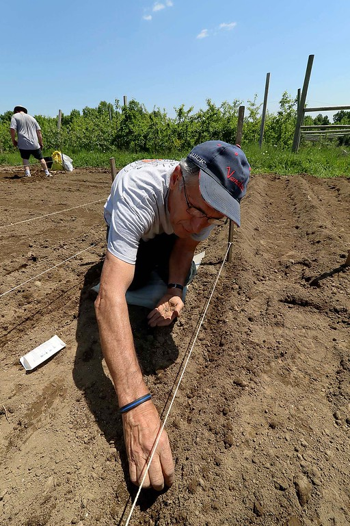 . Felix LeBlanc plants some beets and potatoes at the Sholan Farms community gardens on Tuesday morning. He has had a garden here for the past five years. SENTINEL & ENTERPRISE/JOHN LOVE