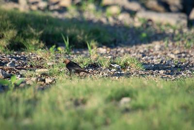 06-29-2018 Elk City birds