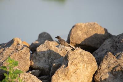 07-17-2018 Bird Elk City
