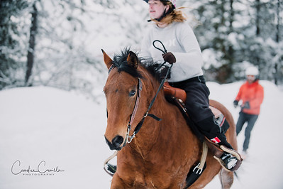skijoring-equine-photographer-4497Candice Camille Photography