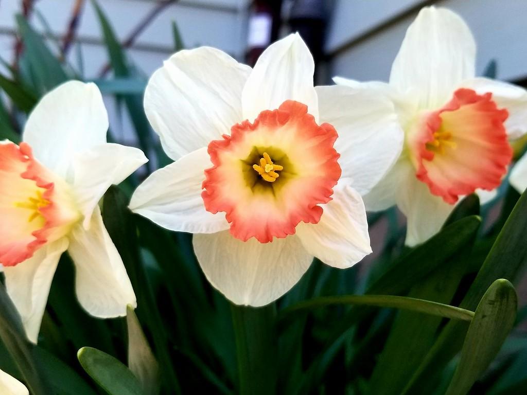 . Flowers in bloom, photo taken by Emily Jane.