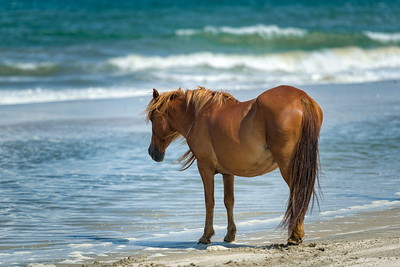 Wistful Mustang