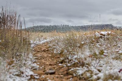 Prairie Trail at Custer State Park