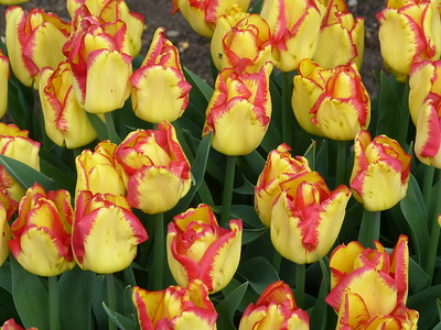 18.04.23 - Bodnant Gardens