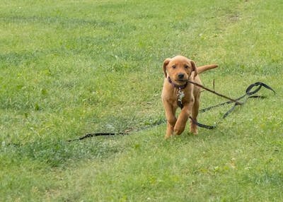 180714 dogs Sunny Percy Chloe