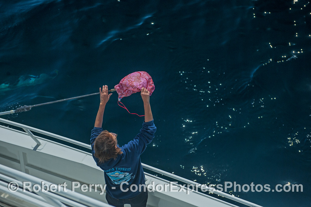 Jill takes Mylar balloon trash off the gaff and out of the ocean