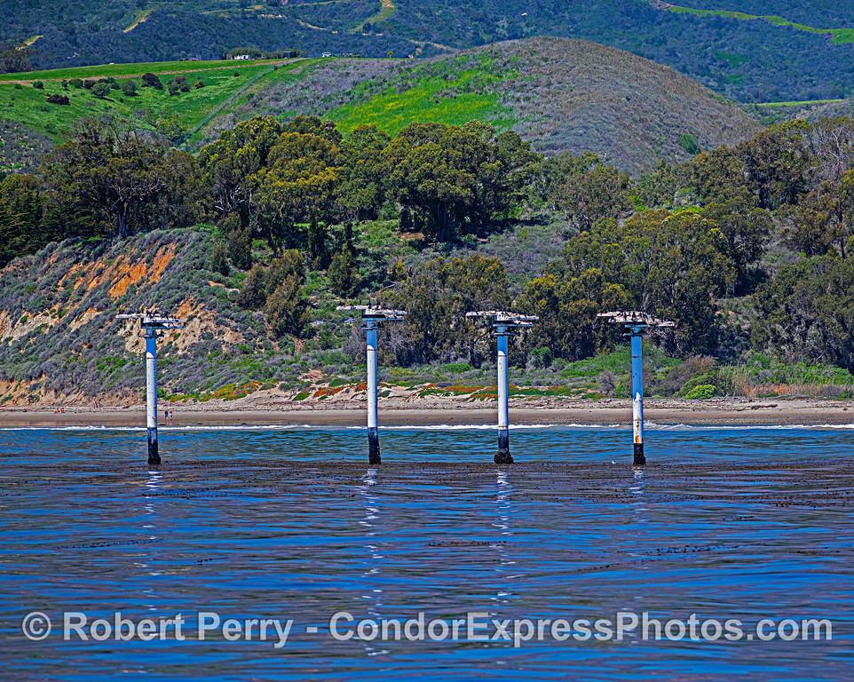 Off the coast of Ellwood, near the Bacarra, four pillars have been erected to serve as cormorant roosting and nesting sites.
