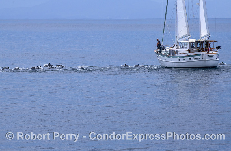 """The sailing vessel """"Endeavor"""" from Santa Barbara has some visitors."""