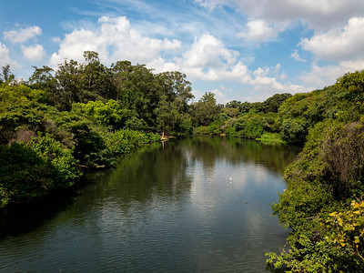 Ibirapuera Park includes green spaces