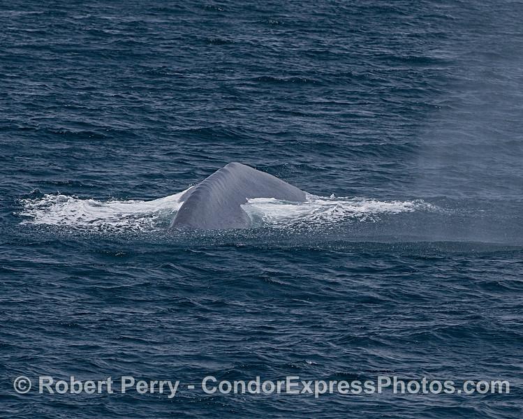 Blue whale spout spray rainfall.