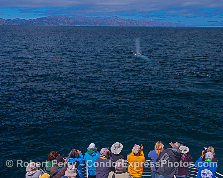 Santa Cruz Island, whale lovers and a giant blue.