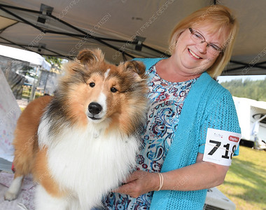 """Corine Rainsforth, from Vernon, gets Shelgrande E Street band """"Boss"""" a 8 month old shetland sheepdog ready to show at the The Prince George Kennel Club Dog Show Friday morning. The two day event, being held at the Oriental Wellness Centre on North Nechko Road, has both a Conformation Show and Rally Obedience. Citizen photo by Brent Braaten      July 27 2018"""