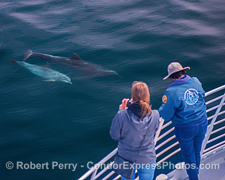 Offshore bottlenose dolphins get friendly with their fan club