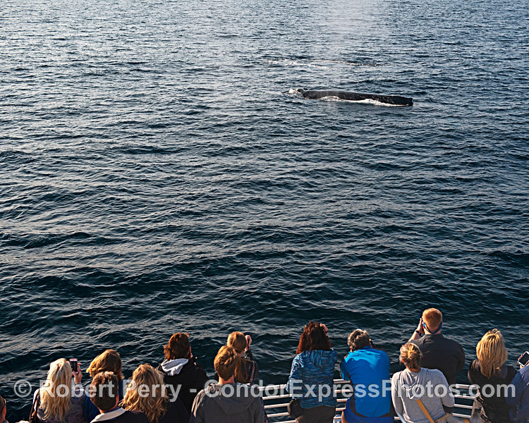 Whale lovers get a close look at a humpback whale.