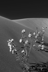 Grat Sand Dunes NP, Colorado