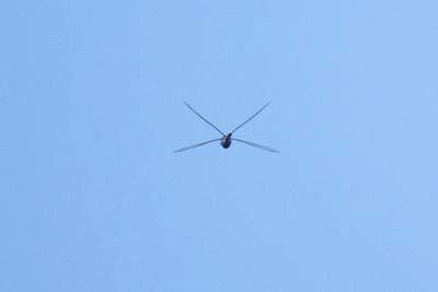 Dragonfly Mid-Long Island Sound