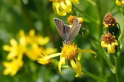 TBD Butterfly